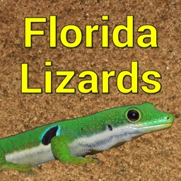 Florida Lizards
