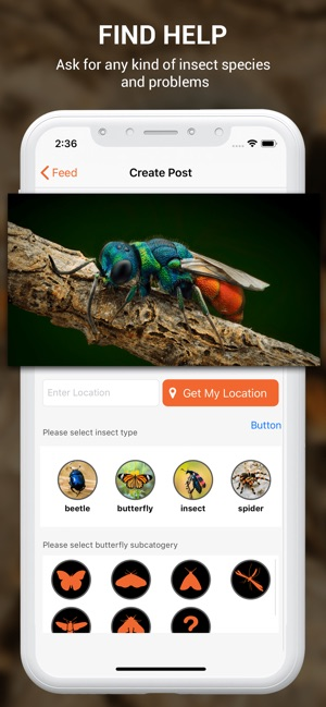 Insect identifier by photo on the App Store