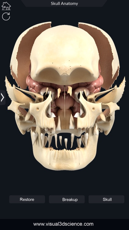My Skull Anatomy screenshot-7