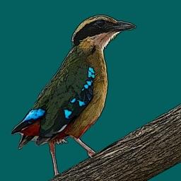 Birds of Zambia