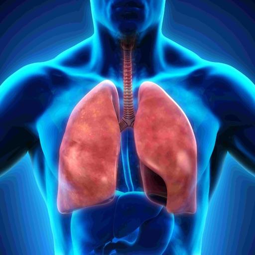 Anatomy : Respiratory System