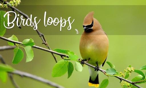 Birds Loops