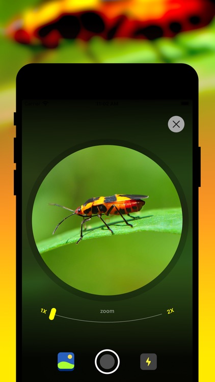Insect Identification screenshot-0