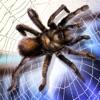 Spider Pet Survival Simulator