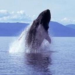 Whale Sounds!