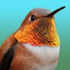 Hummingbirds - Large (Retina)
