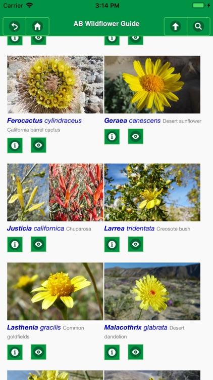 Anza-Borrego Wildflower Guide screenshot-6