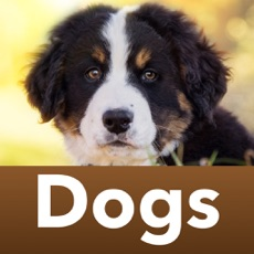 Activities of Dog breeds Guess the Dogs Quiz