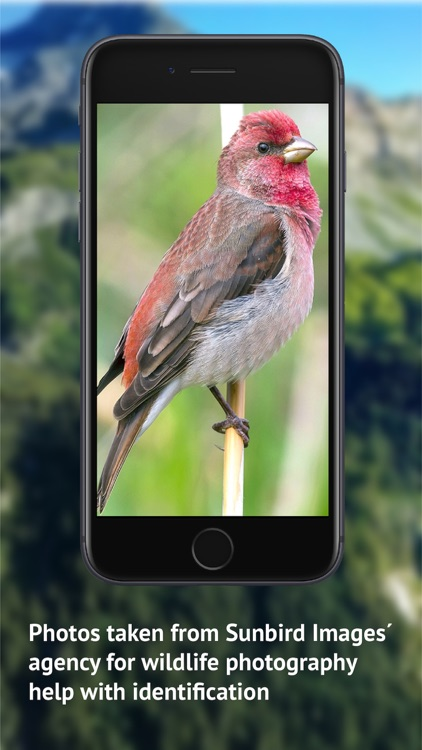 Birds of CH -Photo Guide screenshot-5