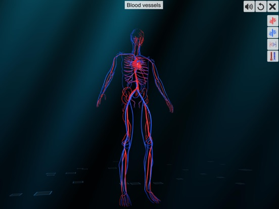 Vascular system screenshot 10