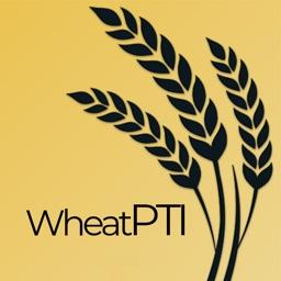 Wheat PTI
