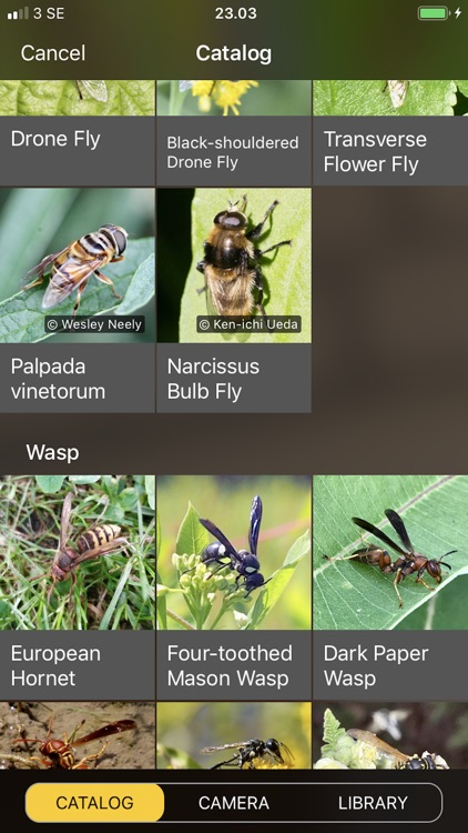 Will it Sting - Insect ID screenshot-5
