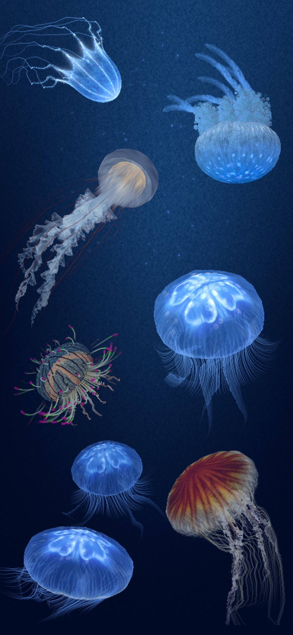 Jellyfish Heaven – Relax Time Cheat Codes