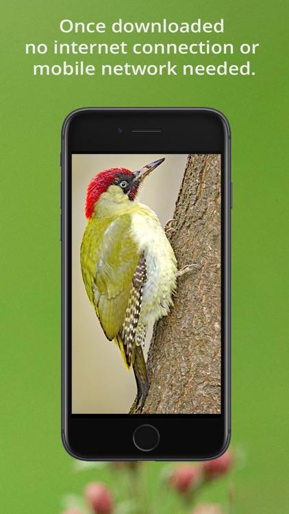 Bird Song Id UK screenshot-9