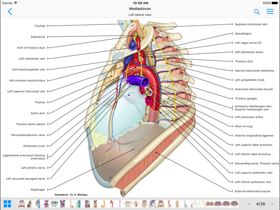 IMAIOS e-Anatomy screenshot