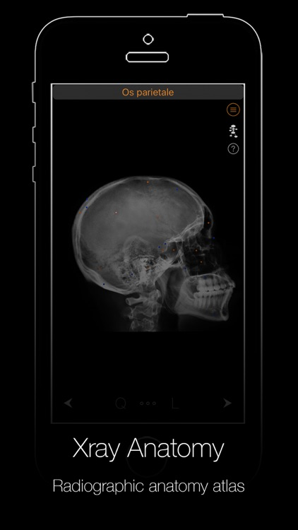 Xray Anatomy screenshot-4