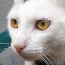 Cat Sounds – Meow Soundboard