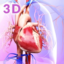 My Circulatory System Anatomy