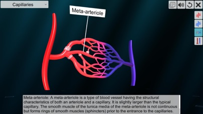 Vascular system screenshot 6