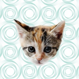 Cute Kitten - Stickers