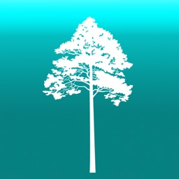 Arboreal - Tree height