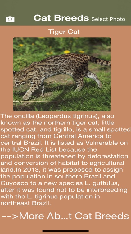 Cat Breeds - Identify your Cat screenshot-3