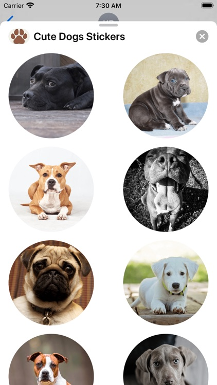 Dogs Sticker Collection