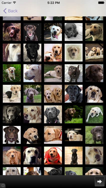 Dog Breeds - for dog lovers - screenshot-3