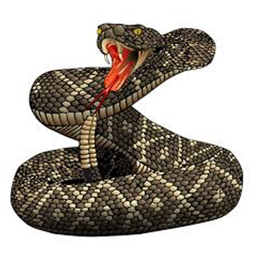 Rattlesnake Sounds and Effects
