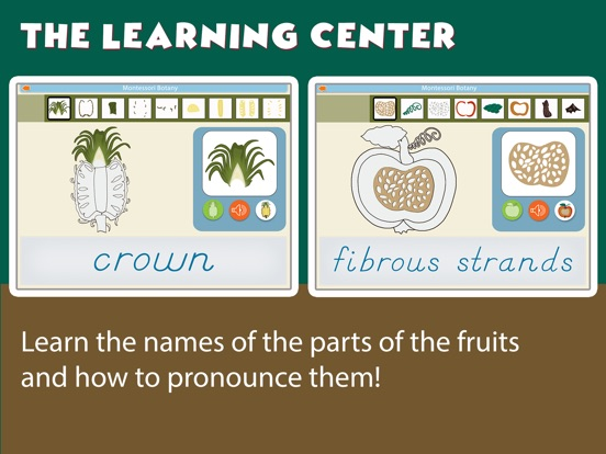 Montessori Parts of Fruits screenshot 9