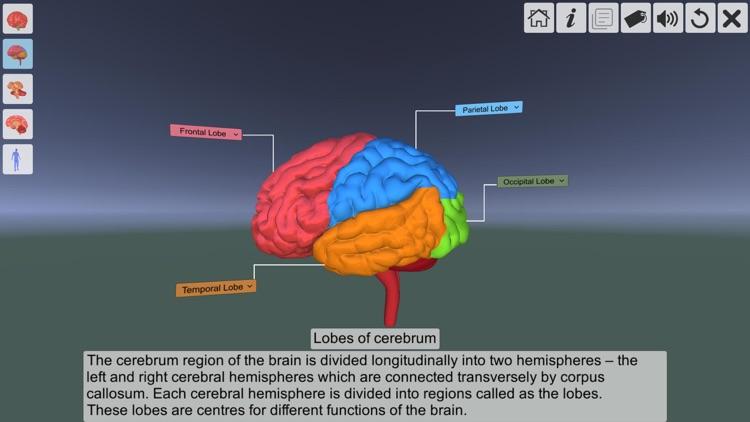 AR Human brain screenshot-5