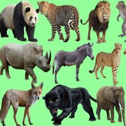 Wild Animals Quiz