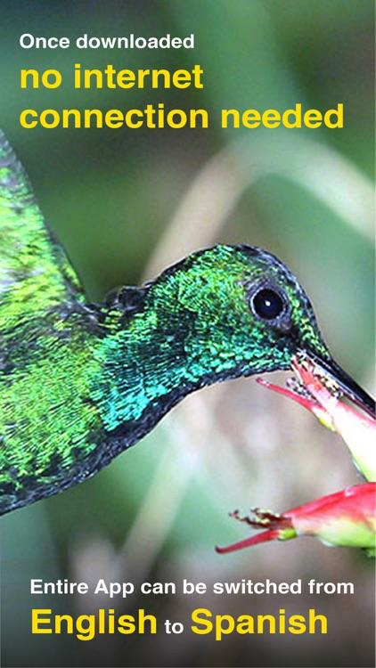 All Birds PR -> Antigua screenshot-9