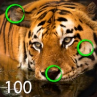 Codes for Spot the Differences 100 Hack