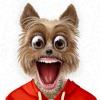 Toppy - 私のおしゃべりペット