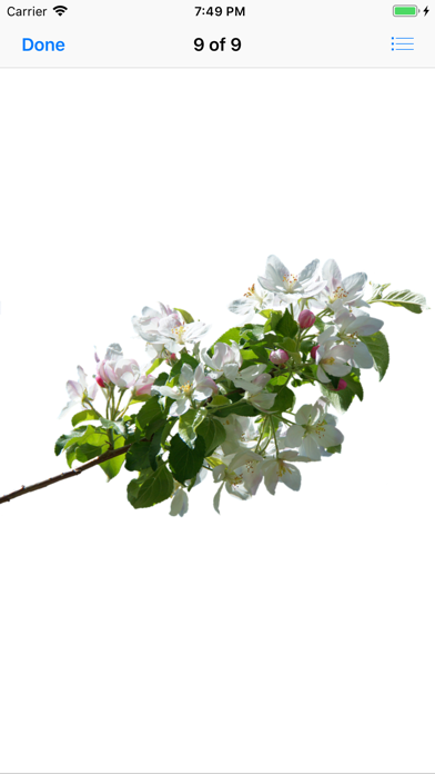 点击获取Apple Blossoms