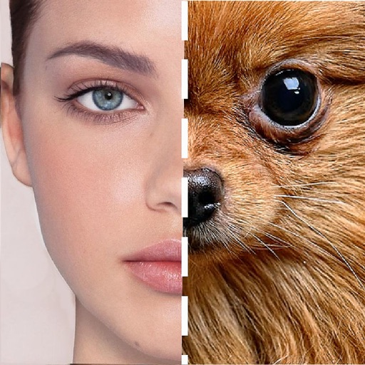 FaceLookAlike: Face Features