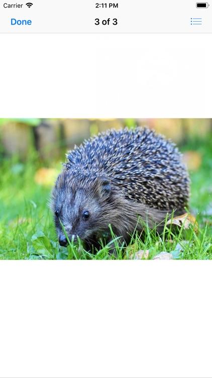 My Hedgehog Stickers screenshot-4
