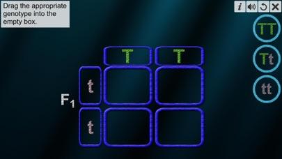 Monohybrid Cross screenshot 4
