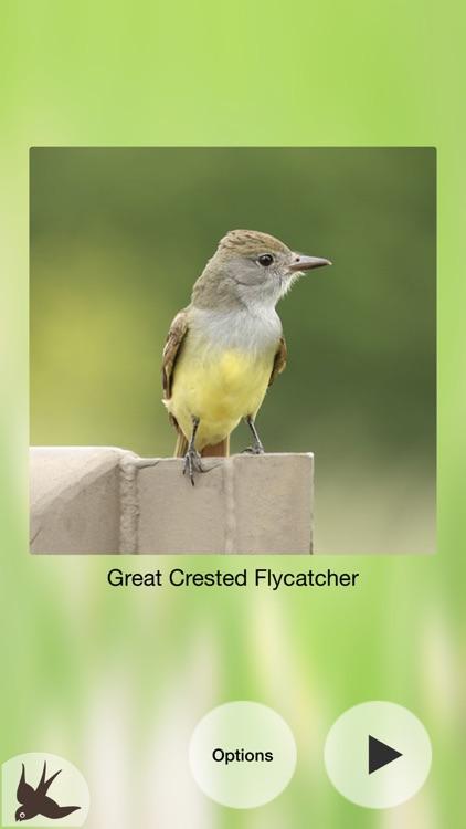 Chirp! Bird Songs & Calls USA screenshot-8