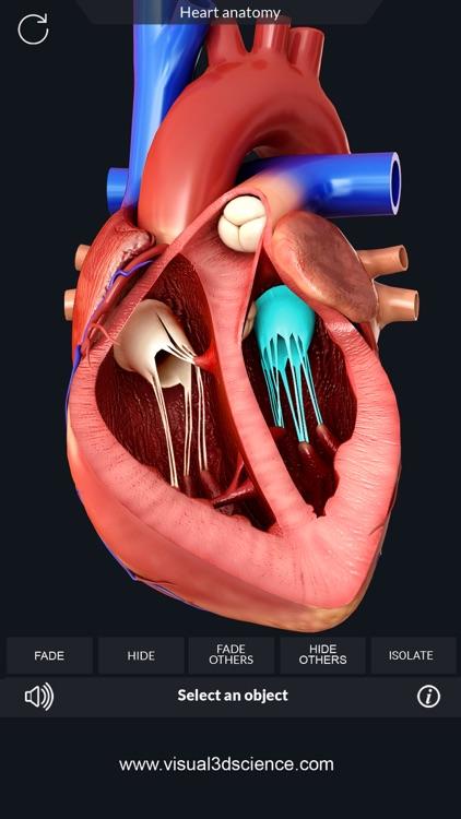 AR Heart Anatomy