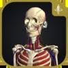 For Organizations: Human Anatomy Atlas