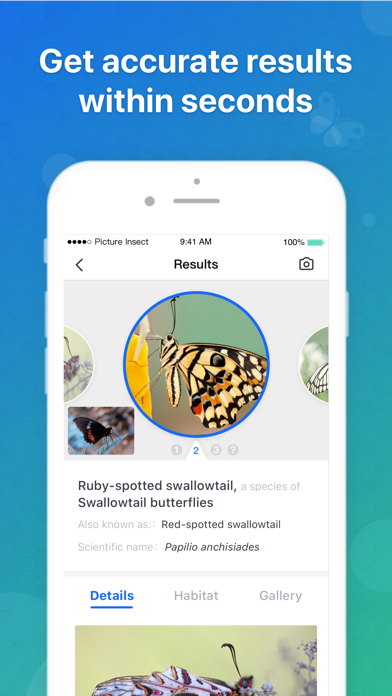 Picture Insect: Bug Identifier Screenshot