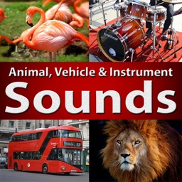 Animal Sounds - Learn Fun Play