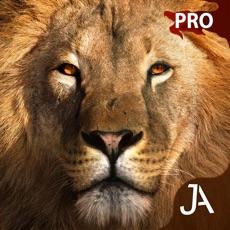 Activities of Safari: I-Pro