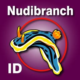 Nudibranch ID E Atlantic Med