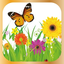 Happy Flower Plant Care & Help