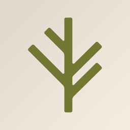 Branch Insurance