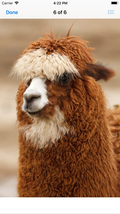 Llama Photography screenshot-7