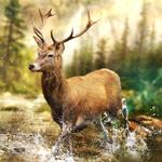 Hunting Clash: Hunter World Hack Online Generator  img